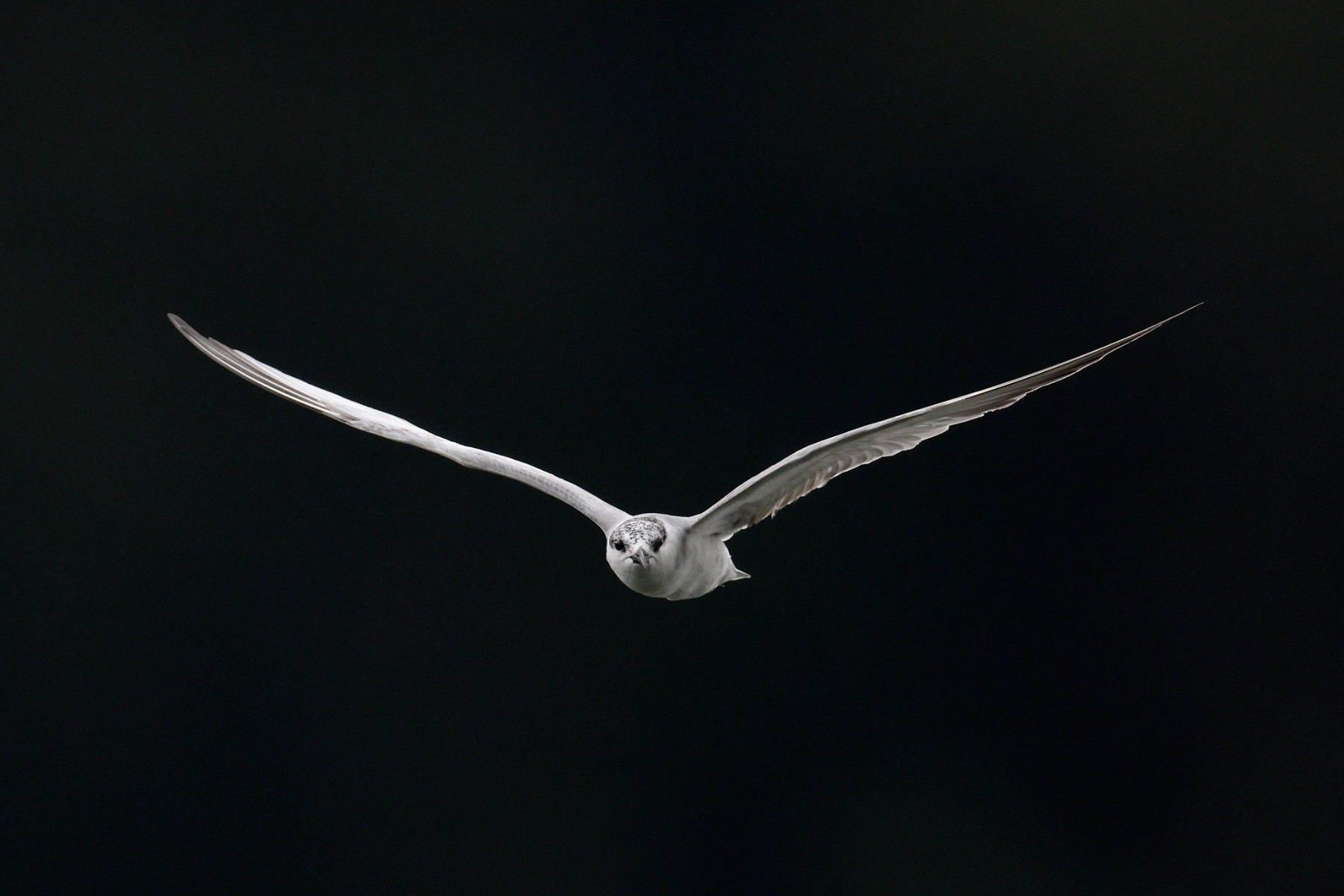 White bird shot by Canon Photographer William Tan using Canon EOS R6